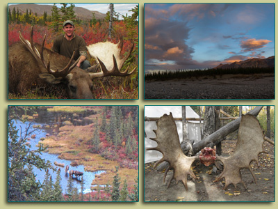 2014 guided Moose Hunting with client, Andrew Harvey