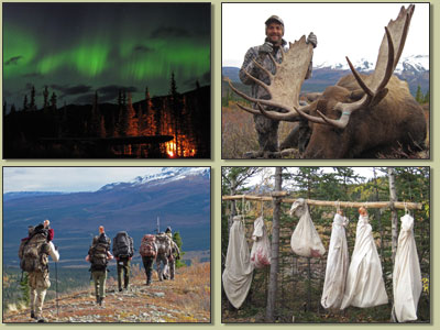 Alaska Moose Hunting Pictures