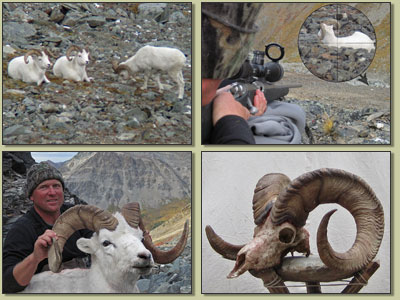 Mike Gedde's sheep hunt photos